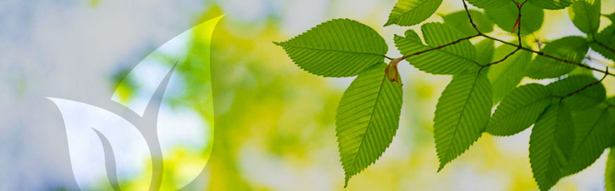 Going green – why it has to be the answer